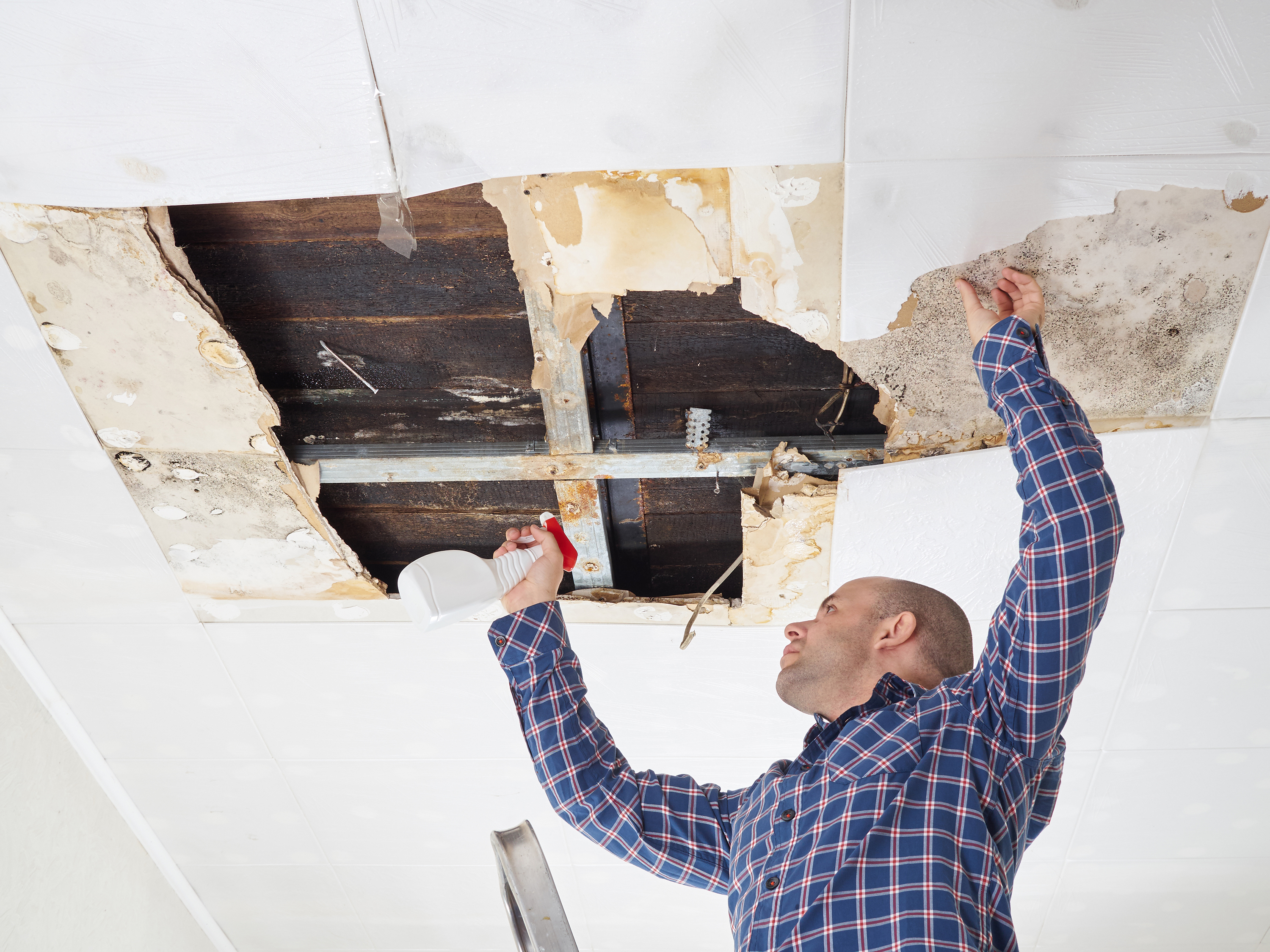 DIY MOLD REMOVAL CAN DO MORE HARM THAN GOOD